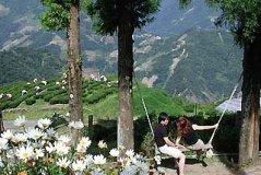 南投清境空中花园(Cing Jing Hanging Garden)
