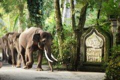 巴厘岛大象公园酒店(Elephant Safari Park Lodge Hotel Bali)