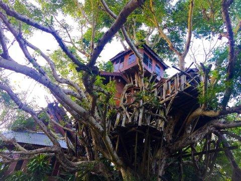 拜县树屋度假酒村(Pai Treehouse)