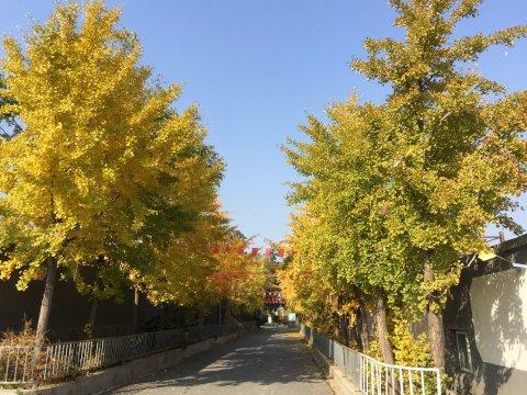 北京农家乐园民宿